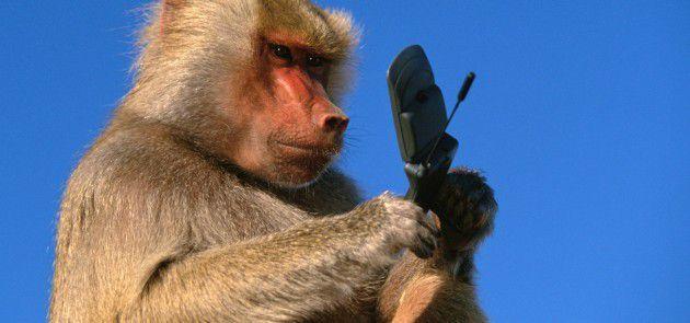 scimmia-cellulare-smartphone
