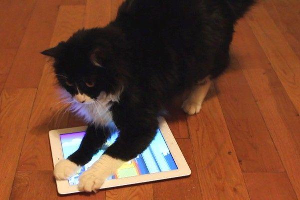 Animali domestici e smartphone