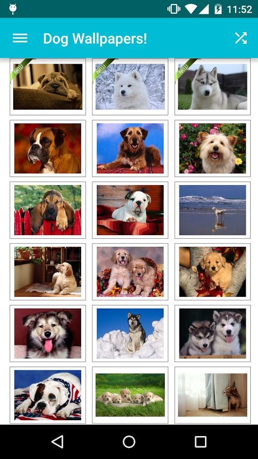 Dog-Wallpapers