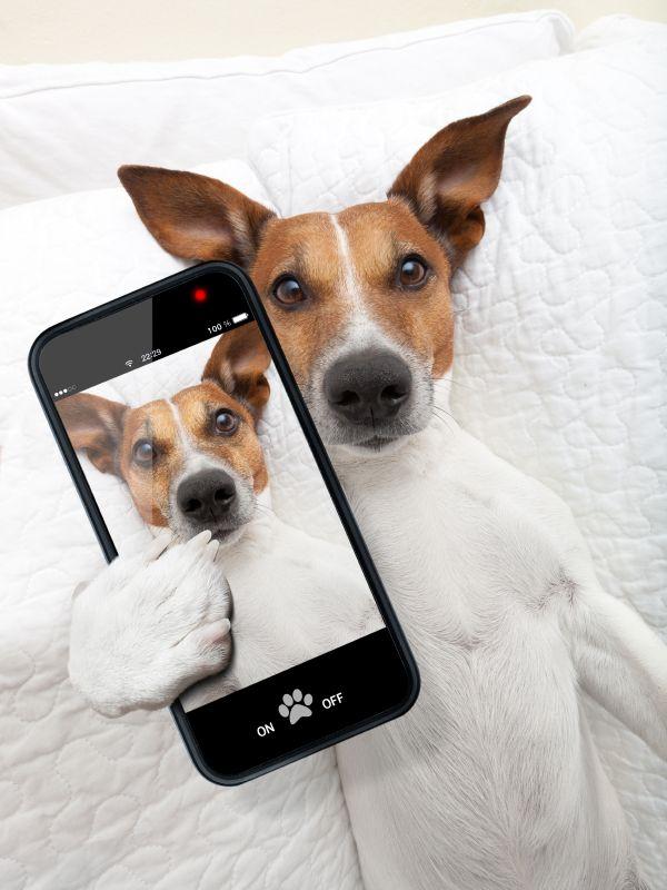 10 app Android per chi ama il mondo dei cani