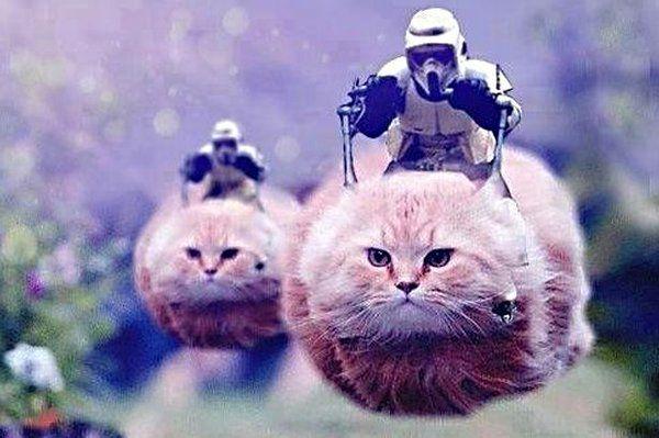 gatti twitter bruxelles