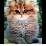gattini-bruxelles-5
