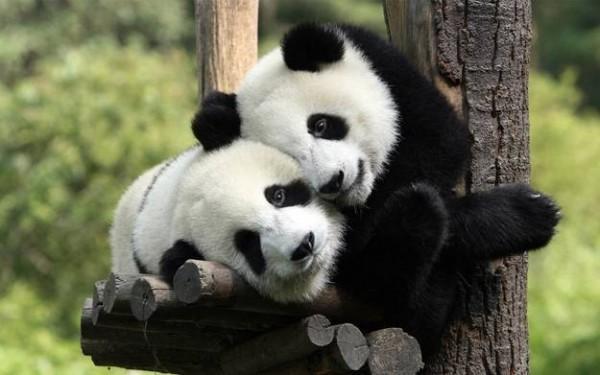 Clonazione, in Cina dal 2016 la prima fabbrica degli animali