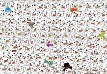 trova il panda