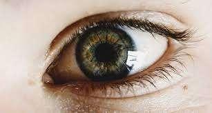 occhio cellule staminali