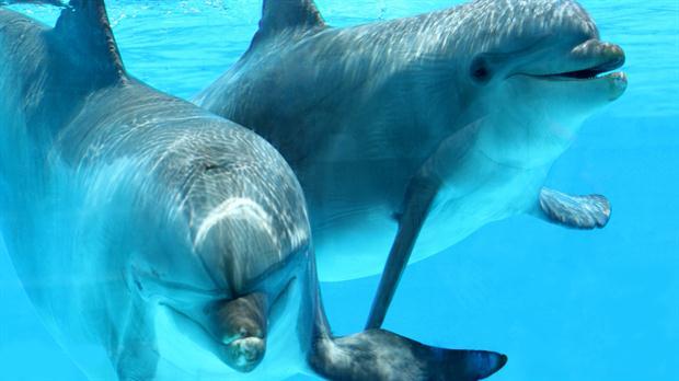 Il linguaggio umano dei delfini registrato dai ricercatori