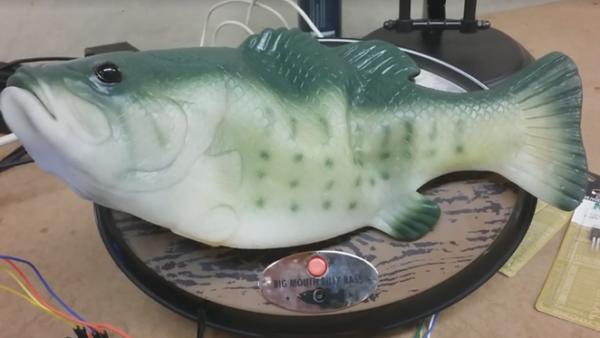 pesce parlante come interfaccia per Alexa