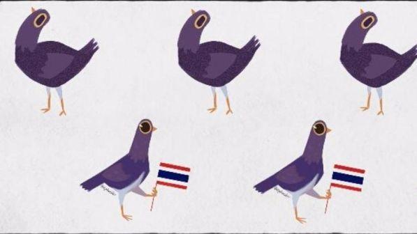 piccioni facebook
