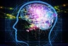 cervello