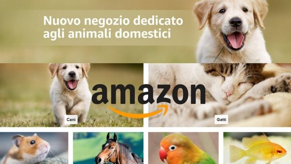 amazon negozio animali
