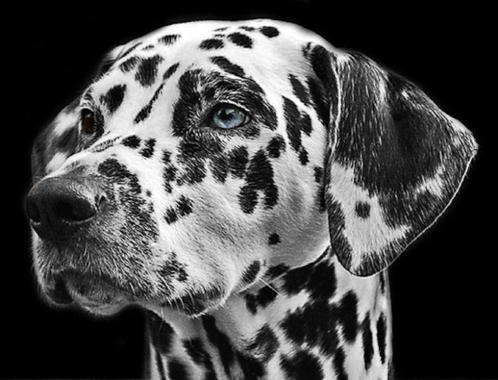 Google Foto Permette Di Scoprire Le Razze Di Cani E Gatti Con L