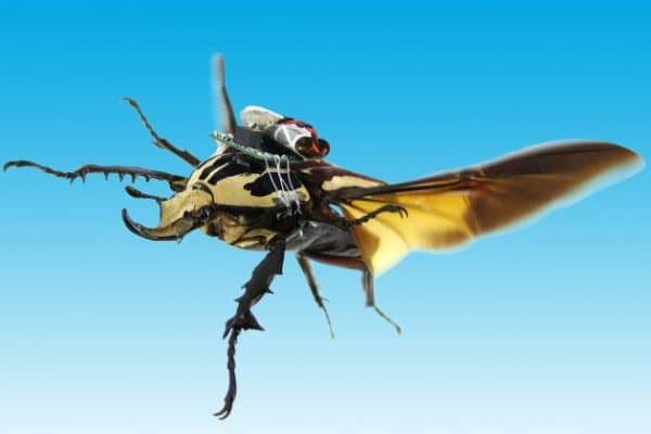 scarabeo cyborg