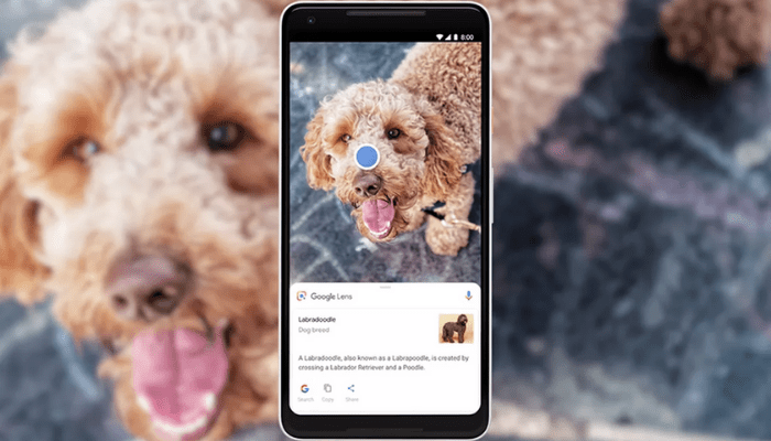 google-lens-razze-felice-canine