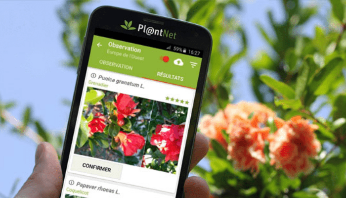 riconoscere-piante-app