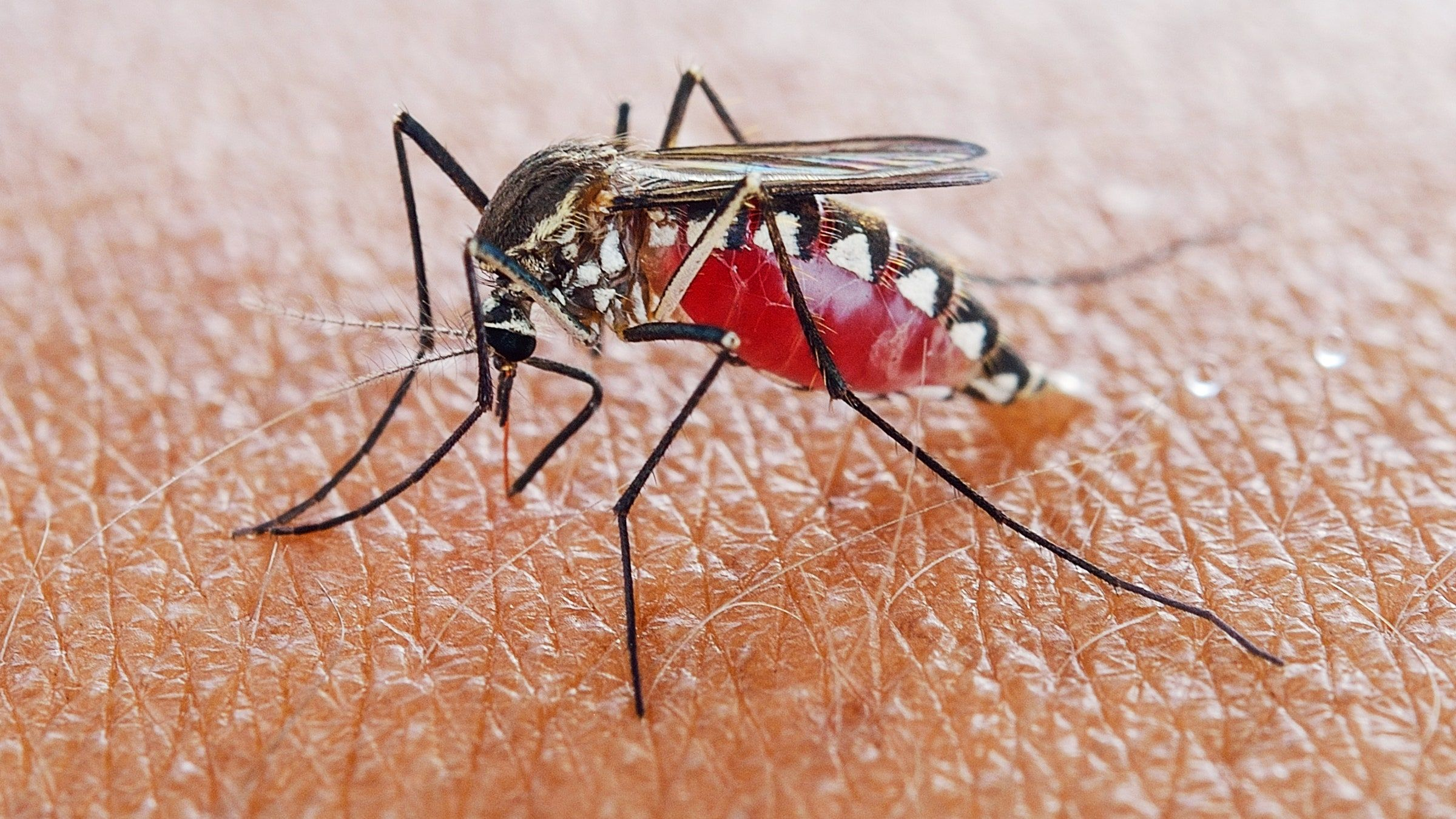 app android mosquito