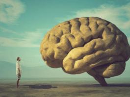 Scienza: gli studi dichiarano che il cervello inizia a declinare a 45 anni